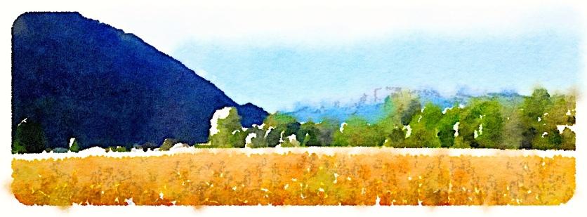 Golden field, Lake Maggiore